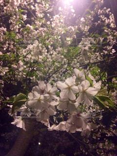 春の写真・画像素材[388410]