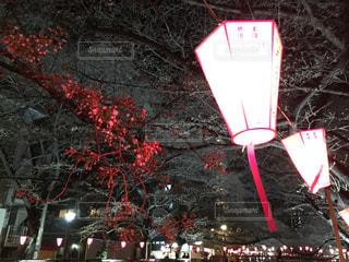 桜の写真・画像素材[405394]