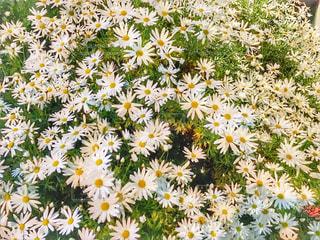 春の写真・画像素材[553443]
