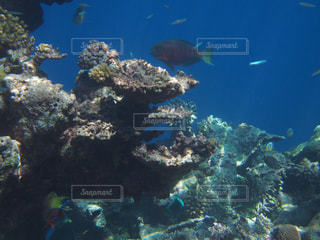 魚の群れの写真・画像素材[1357674]