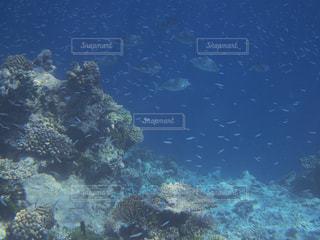 魚の群れの写真・画像素材[1357678]