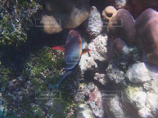 サンゴと魚の写真・画像素材[1357682]