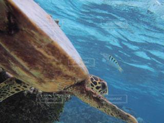 水の下で泳ぐ海亀の写真・画像素材[1357774]