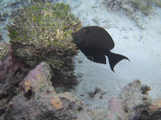 水面下を泳ぐ魚たちの写真・画像素材[1357779]