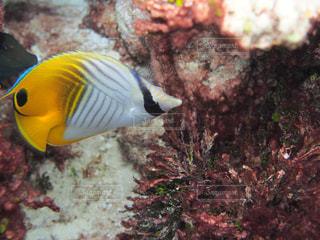 カラフルな魚の写真・画像素材[1357782]