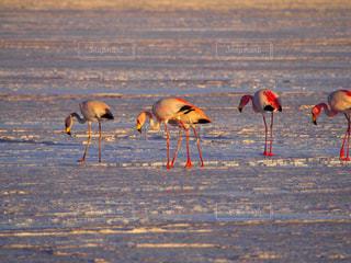 水の体の近くのビーチに立っている鳥の写真・画像素材[1360846]
