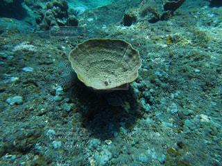 サンゴの写真・画像素材[1360957]