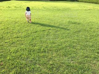 芝生と少女の写真・画像素材[1466908]