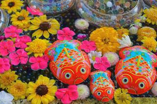 花手水の金魚の写真・画像素材[3665825]