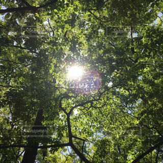雑木林の中の木漏れ日の写真・画像素材[1353801]