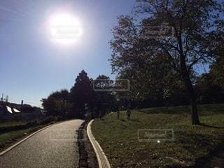 草と木と小径の写真・画像素材[1364221]
