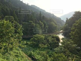 秋川渓谷 吊り橋のある風景の写真・画像素材[1409115]
