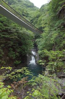 夏のみたらい渓谷の吊り橋の写真・画像素材[1409861]