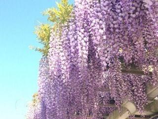 花の写真・画像素材[71108]