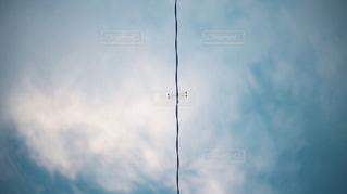 秋空蜻蛉の写真・画像素材[1505276]