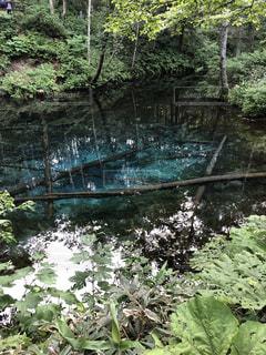 神秘的な青さ 神の子池の写真・画像素材[1354803]