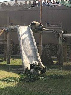 動物の写真・画像素材[13580]