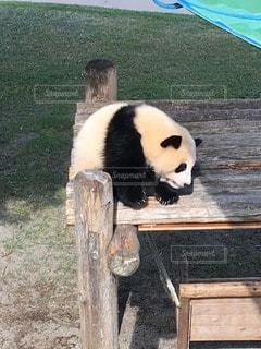 動物の写真・画像素材[13586]