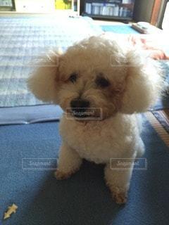 犬の写真・画像素材[13640]