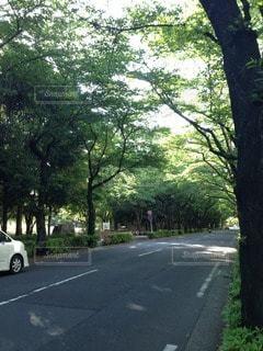 自然の写真・画像素材[13695]