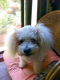 犬の写真・画像素材[13696]