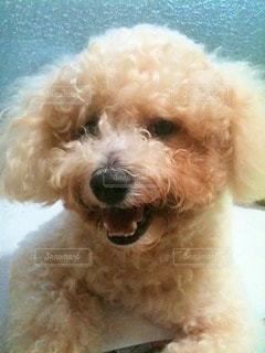犬の写真・画像素材[13701]