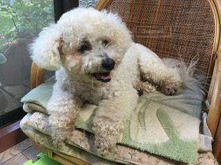 犬の写真・画像素材[61604]