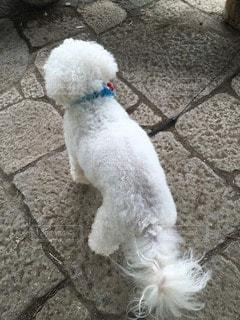 犬の写真・画像素材[73422]
