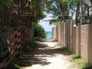 ラニカイビーチへの小道の写真・画像素材[1354523]