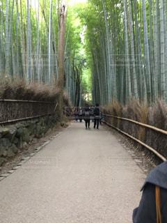 京都嵯峨野の写真・画像素材[1369701]