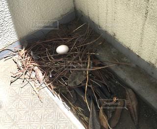 ベランダの巣の卵の写真・画像素材[1379325]