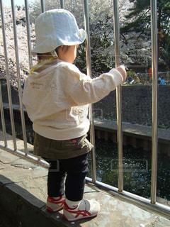 川べのお花見の写真・画像素材[1433929]