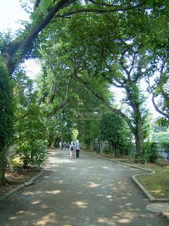 野川緑地の散歩道の写真・画像素材[1464728]