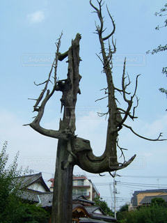 枝の腰かけの写真・画像素材[1608473]