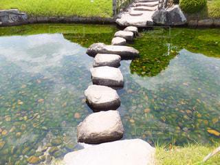 池の飛び石の写真・画像素材[1822051]