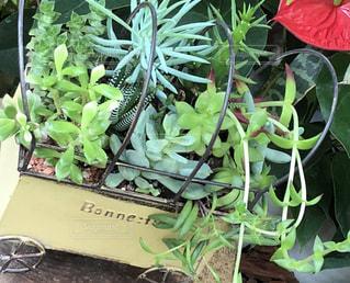 多肉植物の寄植えの写真・画像素材[2473706]