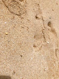 ビーチのクローズアップの写真・画像素材[2334531]