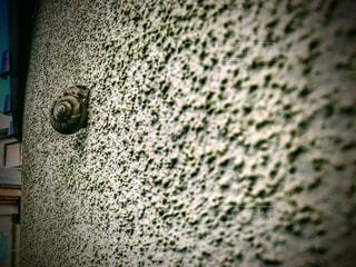 カタツムリの写真・画像素材[1355934]