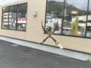 クモの写真・画像素材[1359290]