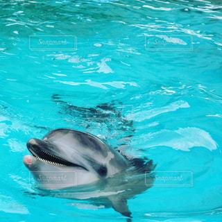 イルカの写真・画像素材[1487229]