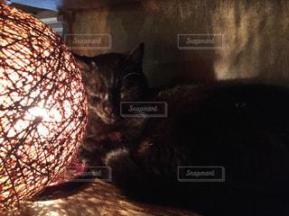 ぐっすり、黒ネコちゃん。の写真・画像素材[1424627]