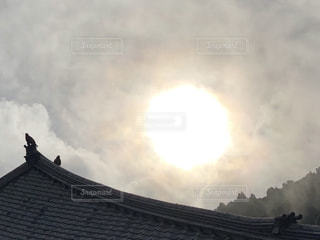 朝日の中のトンビの写真・画像素材[1381523]