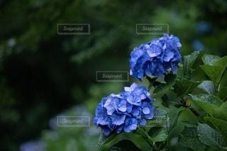 花の写真・画像素材[2627662]