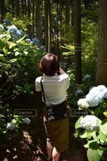 紫陽花の写真・画像素材[1357564]