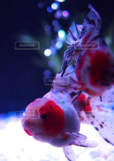 近くに魚のアップの写真・画像素材[1364829]