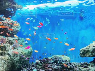 熱帯魚の写真・画像素材[1365266]