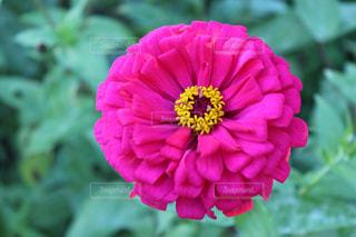 お花の写真・画像素材[1379274]