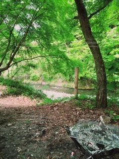 公園の写真・画像素材[13167]