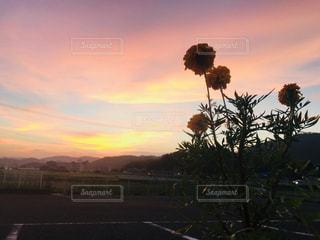 花と夕焼けの写真・画像素材[1360271]
