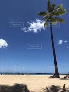 ビーチのヤシの木の写真・画像素材[1432301]